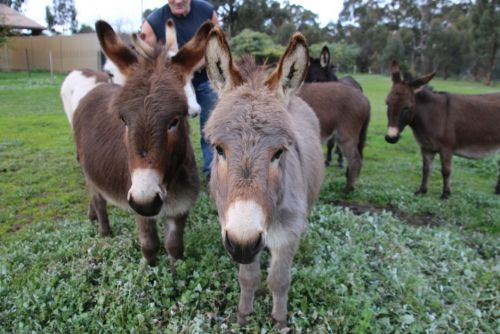 Donkey Tales Farm Cottages - Tourism Canberra