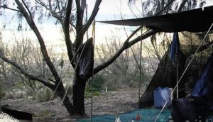 Main Beach Foreshore Camping Grounds - Tourism Canberra