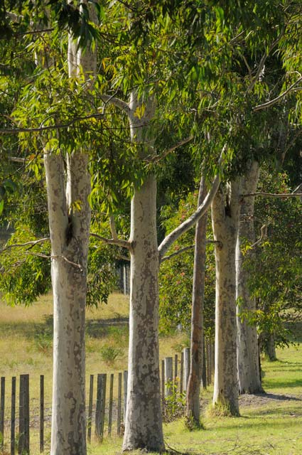 Stringybark Cottages - Tourism Canberra
