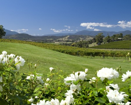 Balgownie Estate Vineyard Resort and Spa - Tourism Canberra