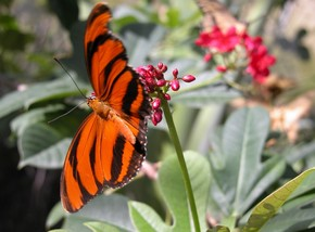 Butterfly Farm - Tourism Canberra