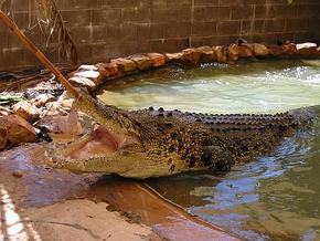 Wyndham Zoological Gardens and Crocodile Park