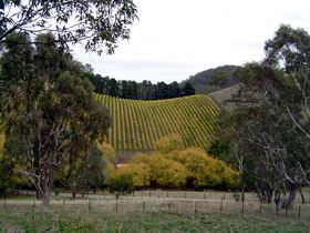 Mt Bera Vineyards