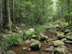 Amamoor State Forest - Tourism Canberra