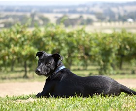 Moothi Estate Vineyard and Cellar Door - Tourism Canberra