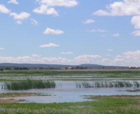 Fivebough Wetlands - Tourism Canberra