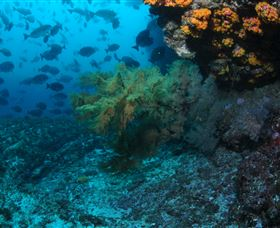Henderson Rock Dive Site