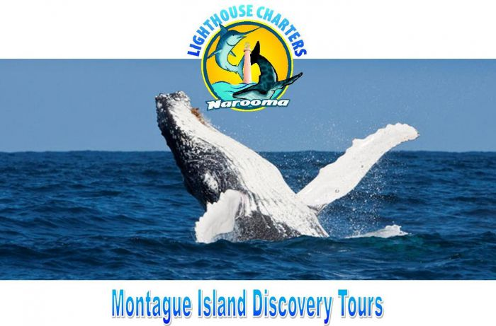 Lighthouse Charters Narooma - Tourism Canberra