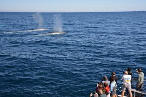 Blue Whale Perth Canyon Expedition - Tourism Canberra