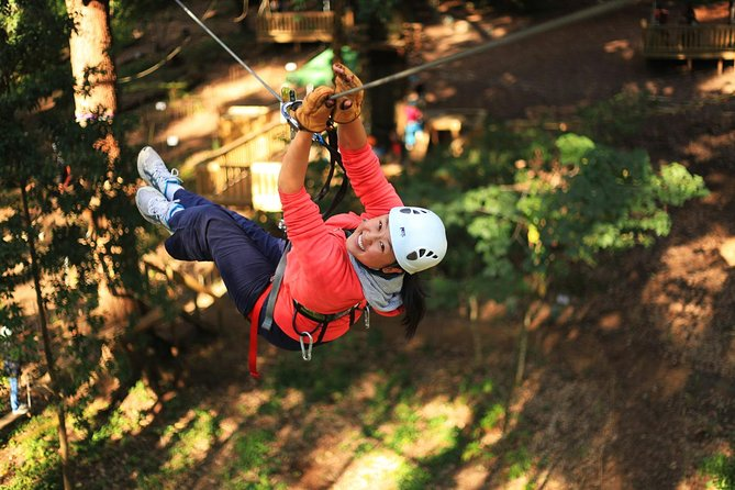 Trees Adventure Lane Poole Park - Treetop  Zipline Experience