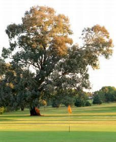 Cowra Golf Club - Tourism Canberra