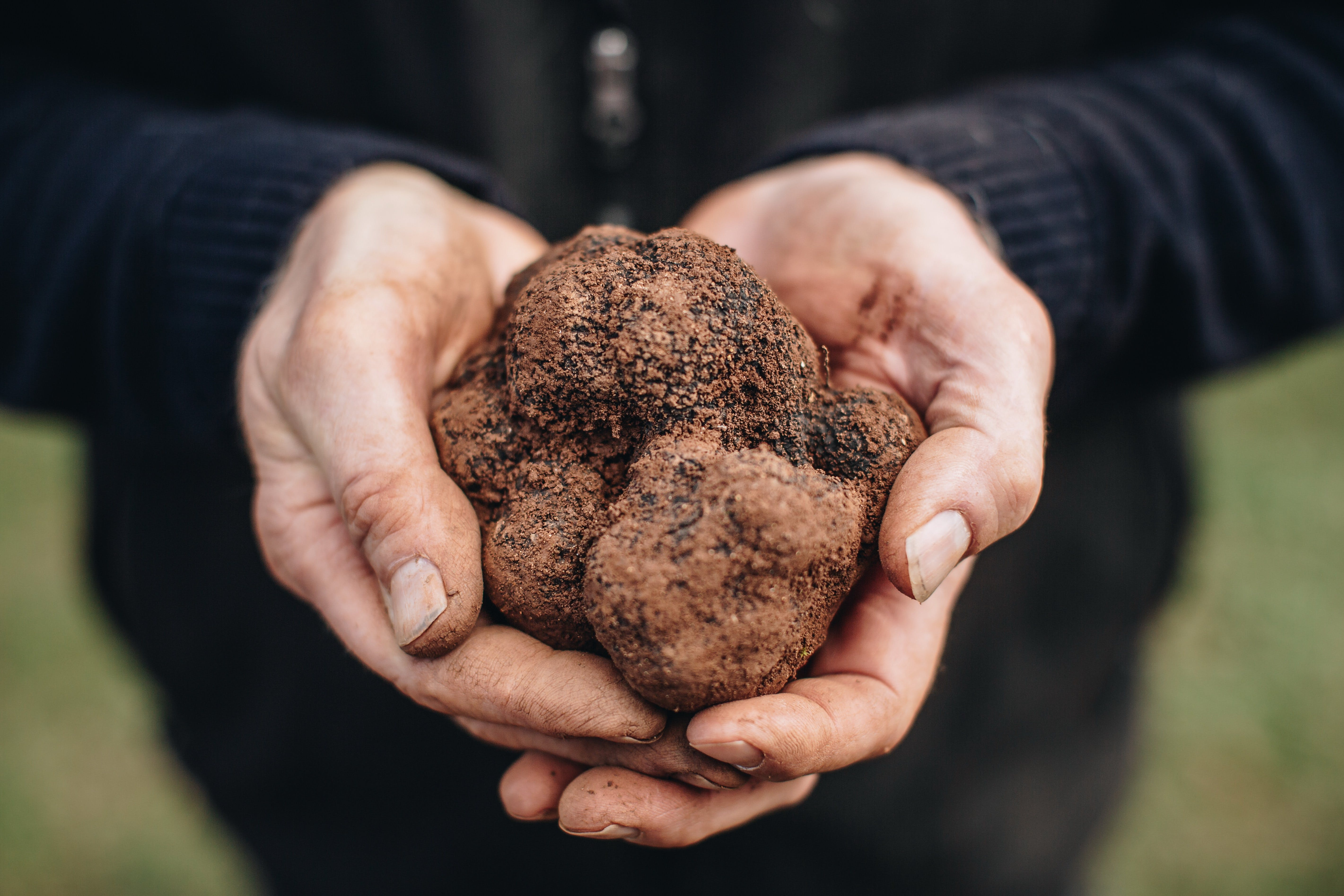A Taste of Truffles - Tourism Canberra