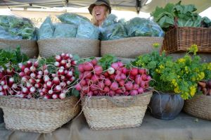 Berry Farmers' Market - Tourism Canberra