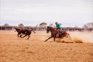 Birdsville Campdraft  Rodeo and Bronco Branding - Tourism Canberra