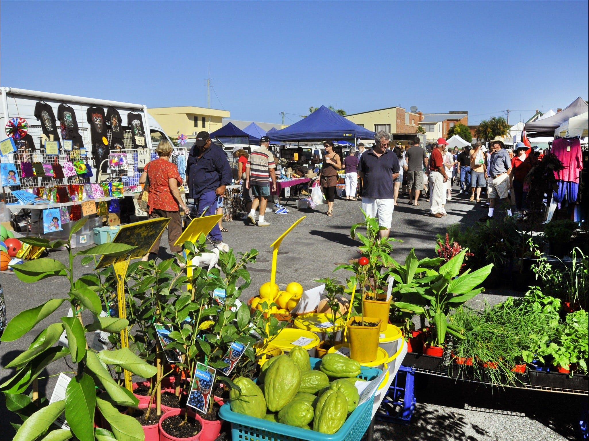 Maclean Community Monthly Markets - Tourism Canberra