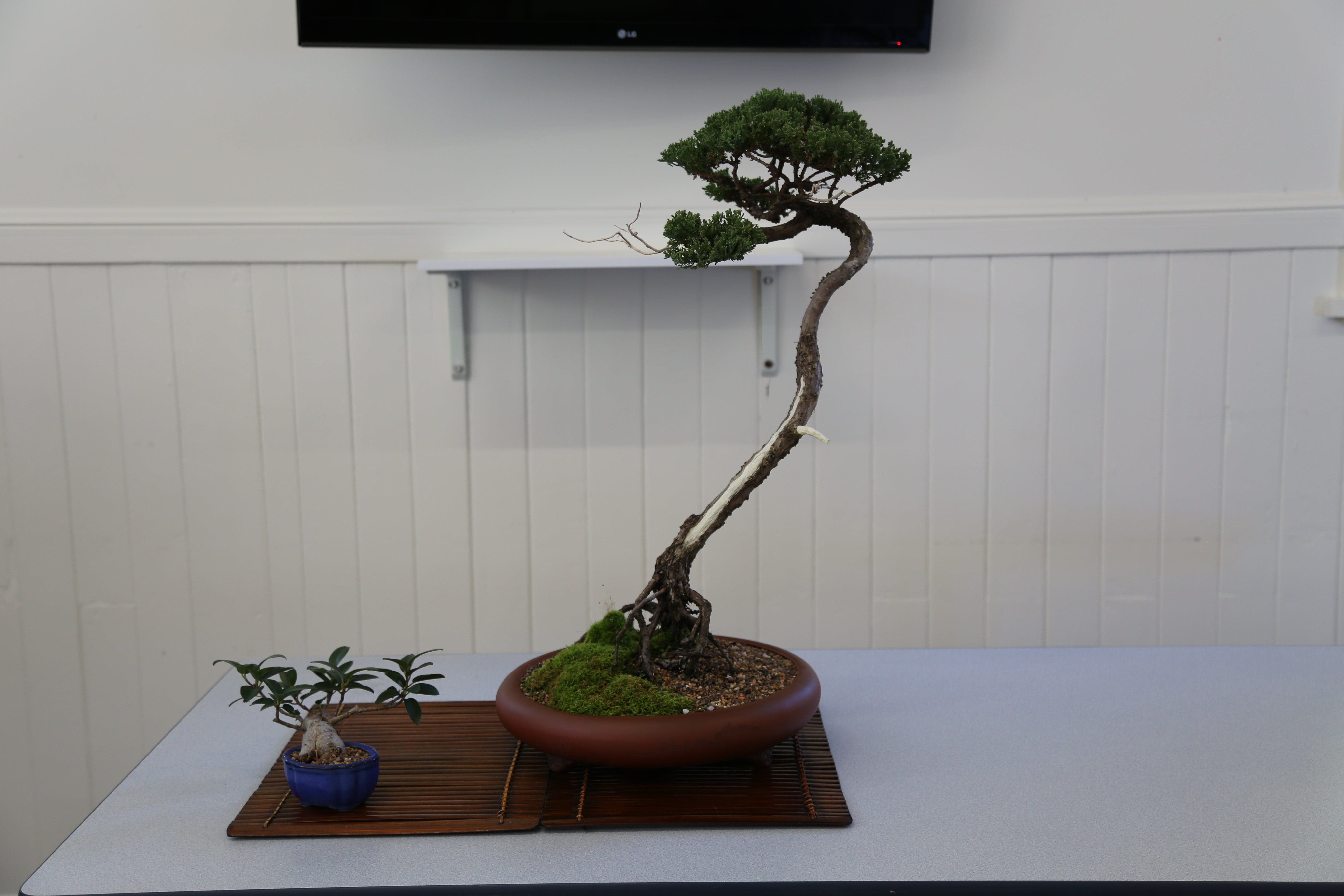 Wauchope Bonsai Workshop Group - Tourism Canberra