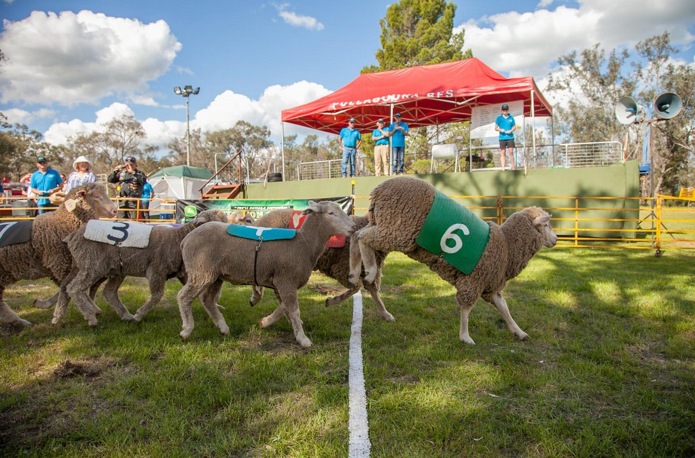 Caragabal Sheep Races - Tourism Canberra