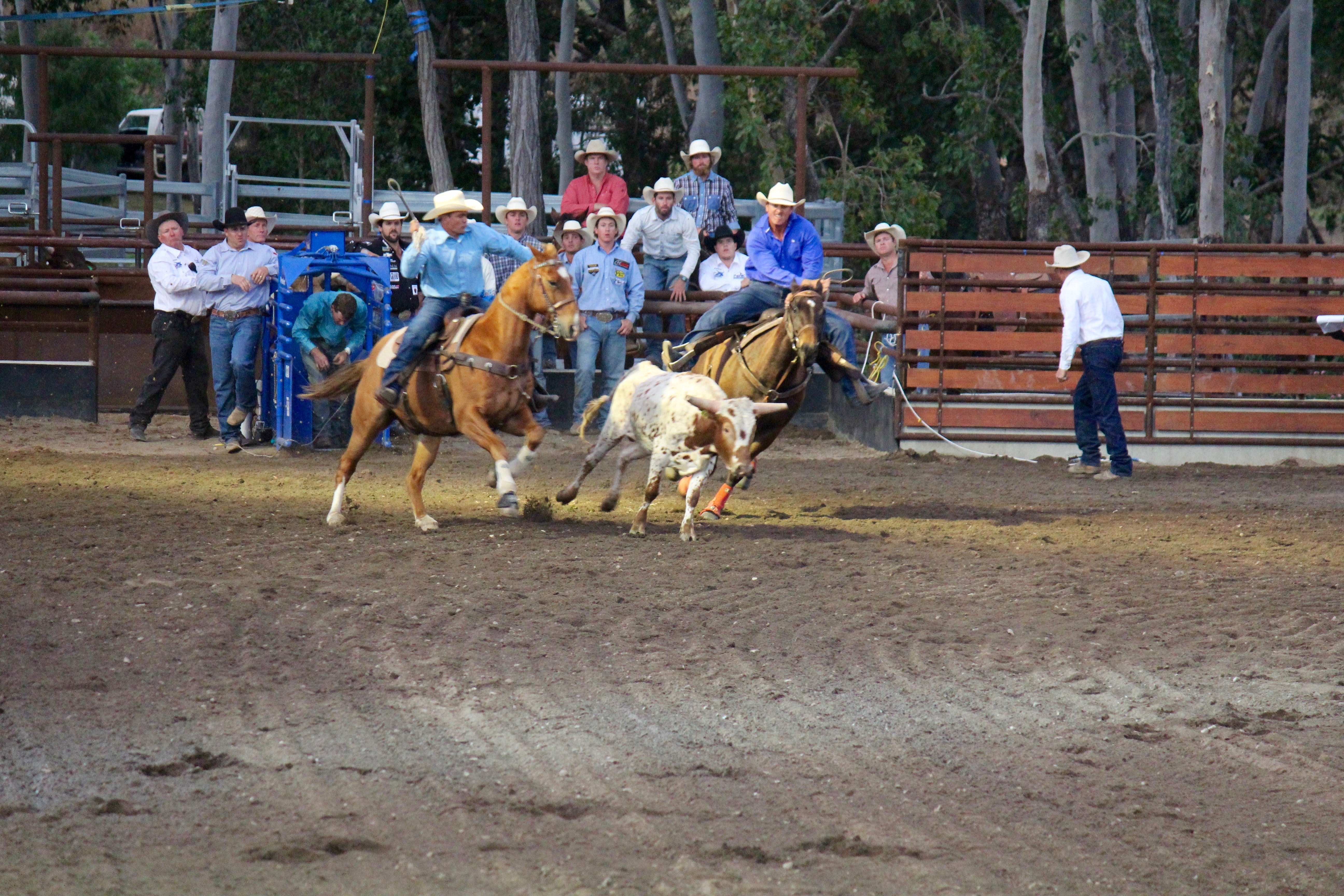 North Queensland Elite Rodeo - Tourism Canberra