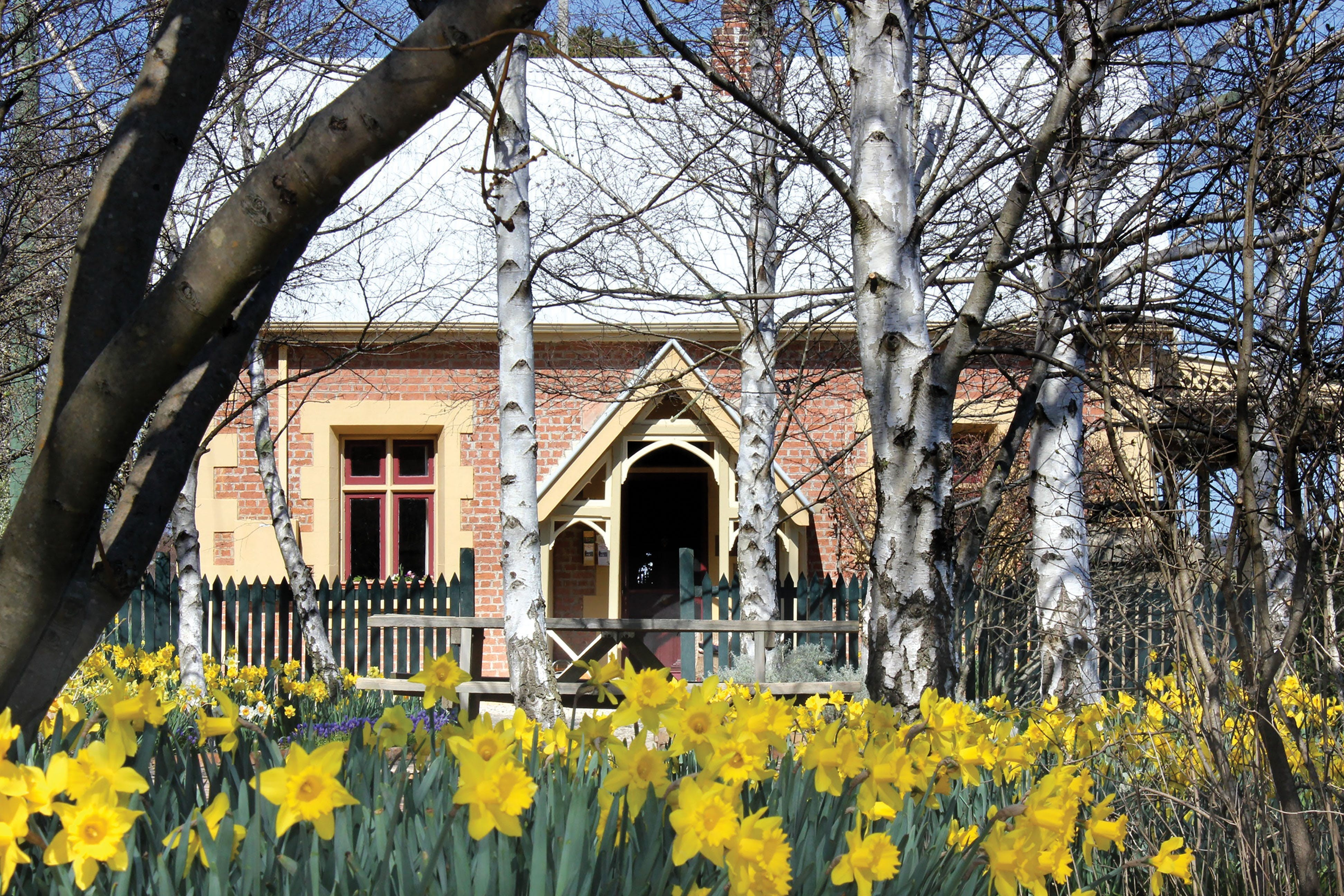 Daffodils at Rydal - Tourism Canberra