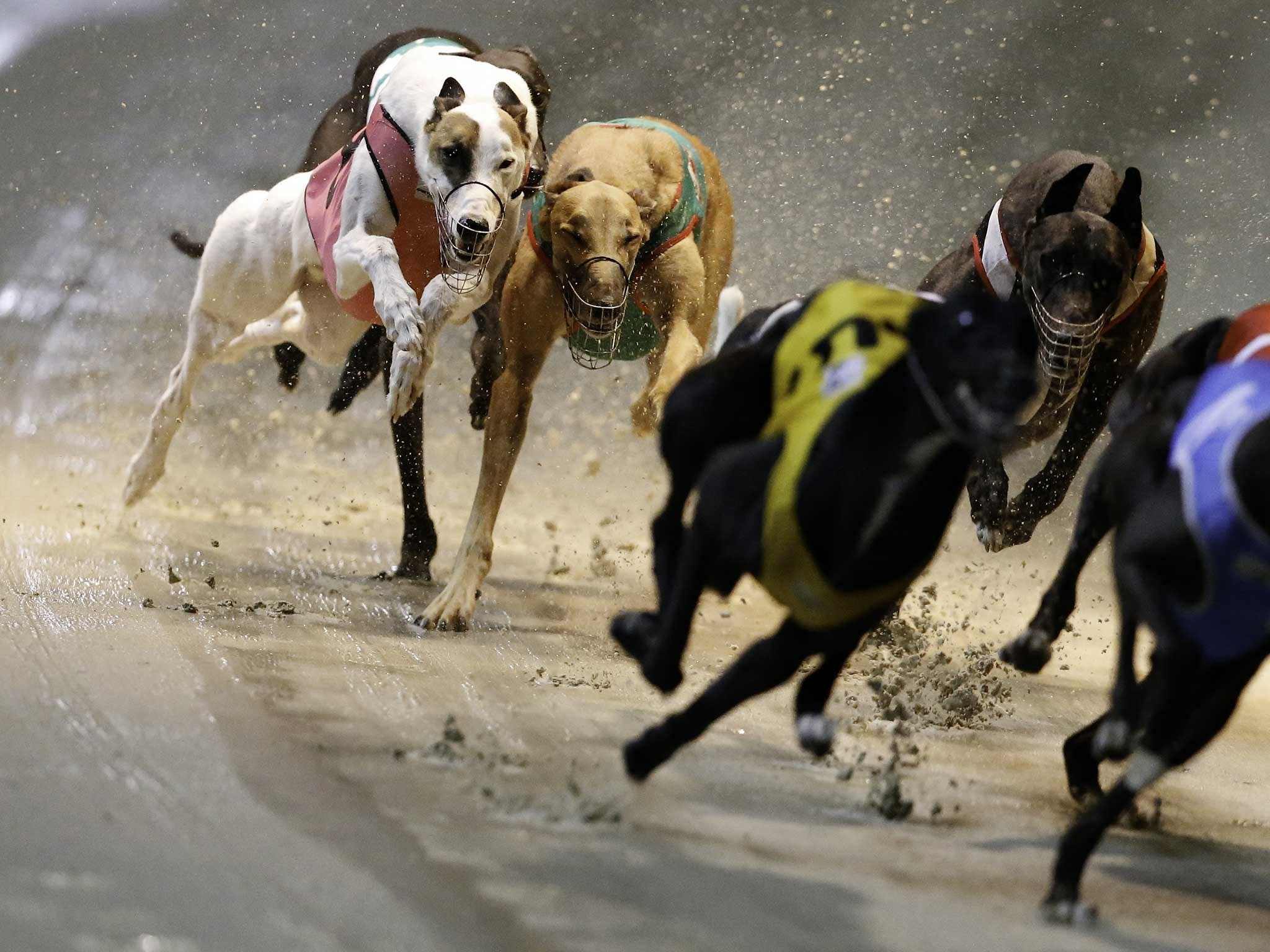 Twilight Greyhound Racing - Tourism Canberra